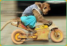 New Fargo Motorcycle Gang Called 'Hell Monkeys'