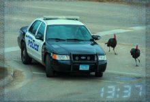 Police Turkeys Helping Moorhead Police Solve Crimes
