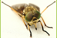 FM Area To Begin Spraying For Gadflies