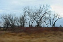 Groups Of Homeless Living In Trees East Of Glyndon