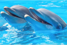 Dolphins Being Introduced To Fargo-Moorhead Area Hotel Swimming Pools