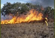 Controlled Burn That Got Out Of Control Now 50% Contained